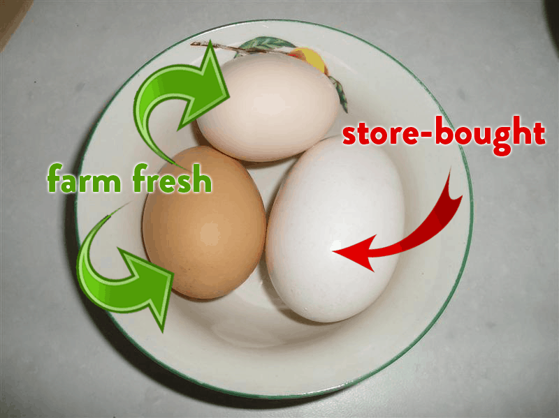 farm and store-bought eggs side by side