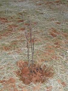 trees-003-medium