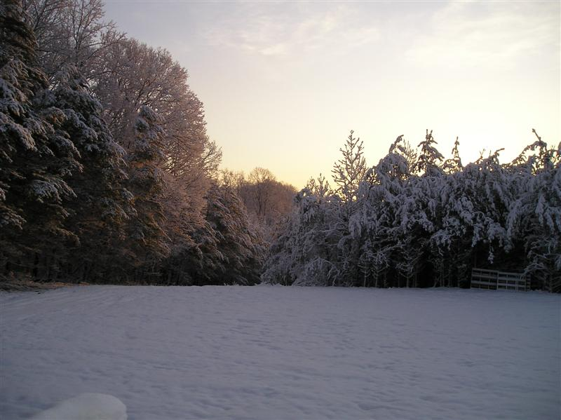 winter-snow-2009-001-medium