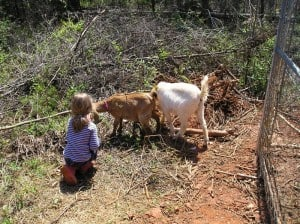 kids-and-goats