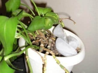 ice cubes in plant pot