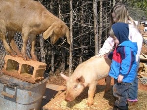farm life children with goat pig
