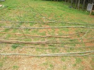 cucumber trellis out of sticks