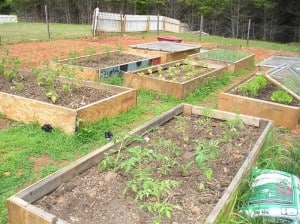 Garden May 2010
