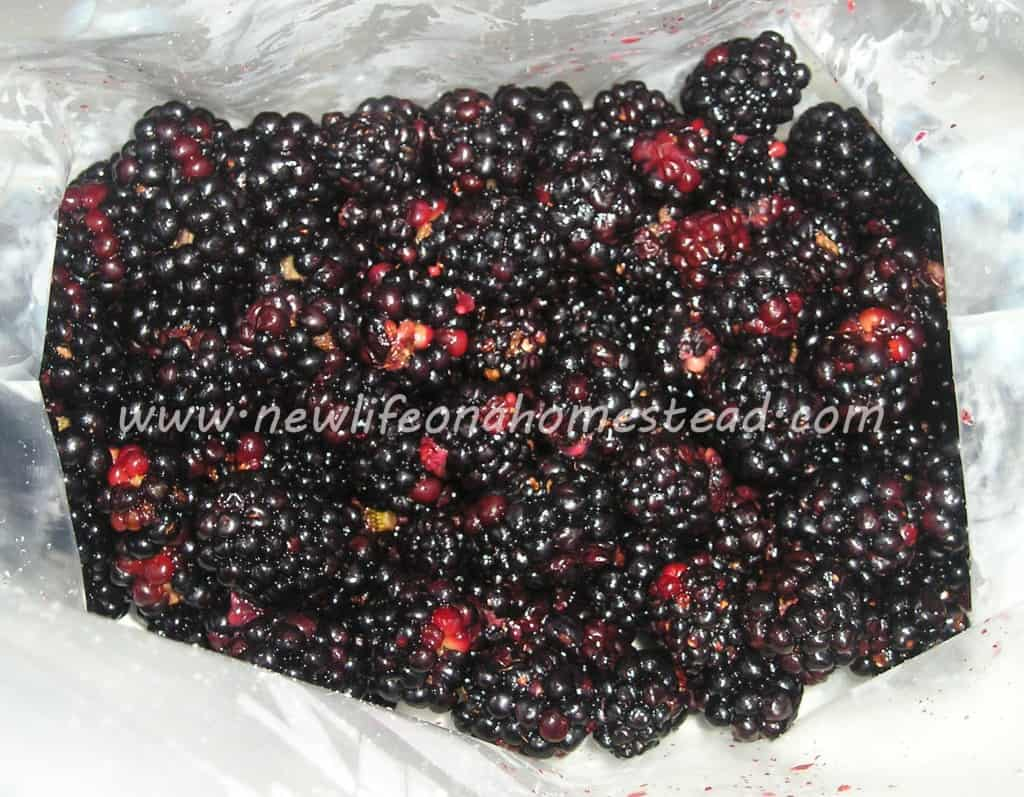 How To Get Worms Out of Blackberries https://newlifeonahomestead.com