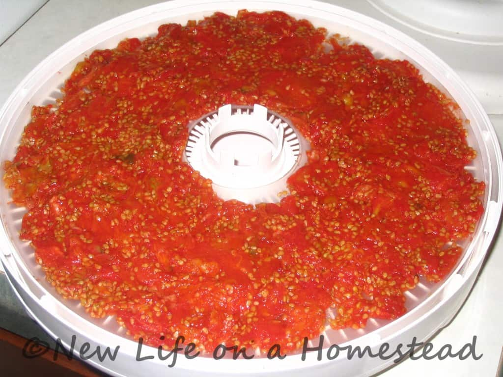 Dehydrating tomato pulp http://newlifeonahomestead.com
