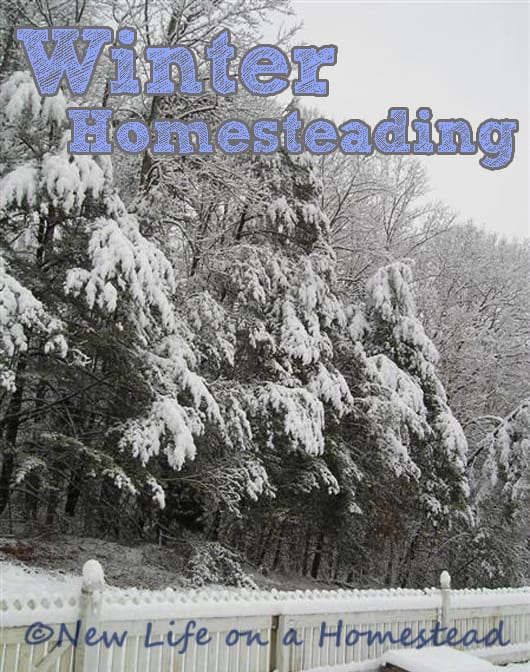 Homesteading Through The Winter