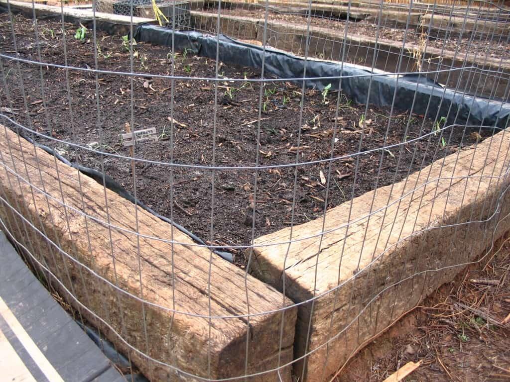 cat proofing garden