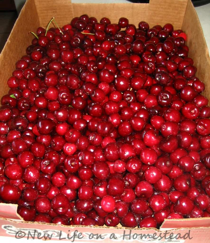 Preserving Cherries, PLUS How To Use Cherry Pits