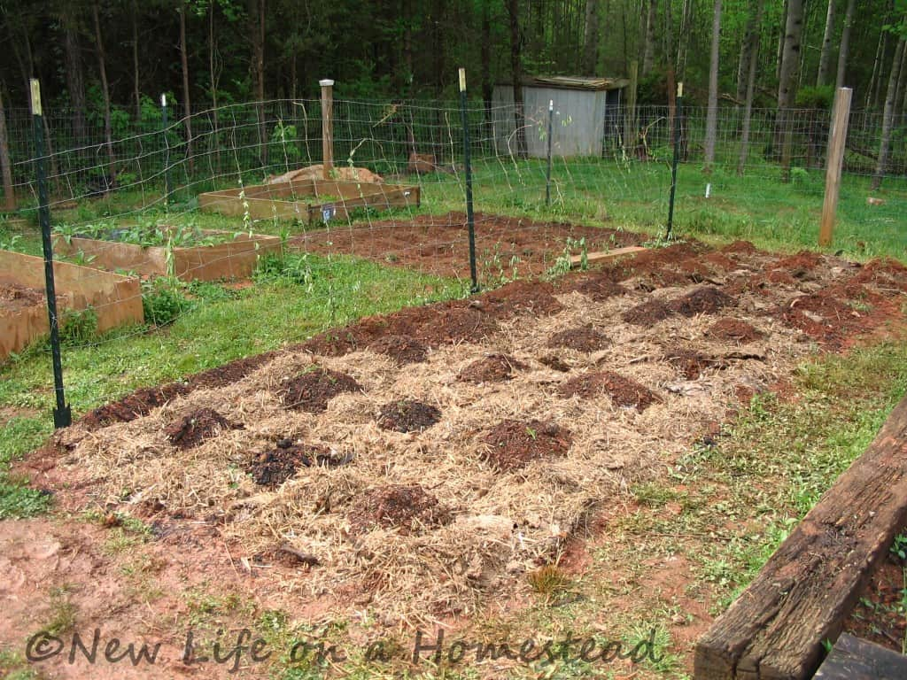 Squash bed new watermarked