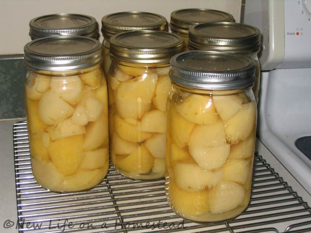 canning potatoes-10