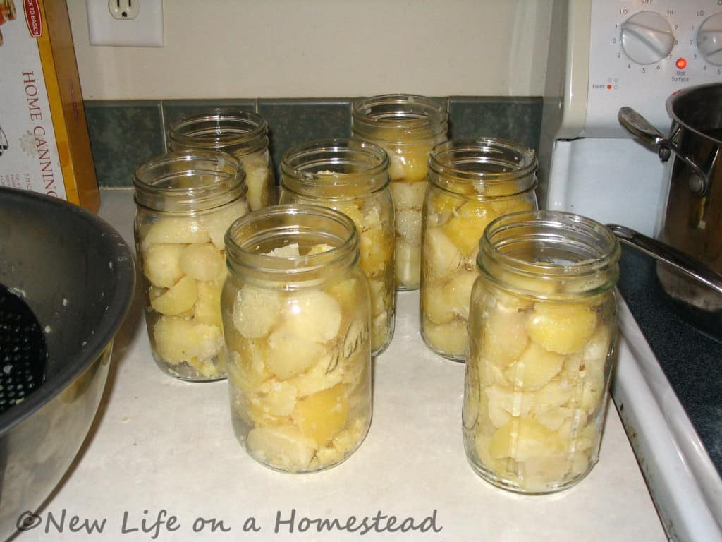 canning potatoes-3