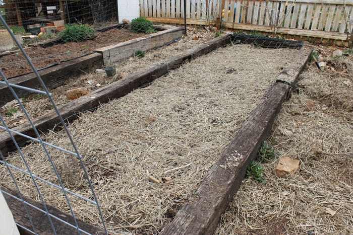 carrots and greens bed