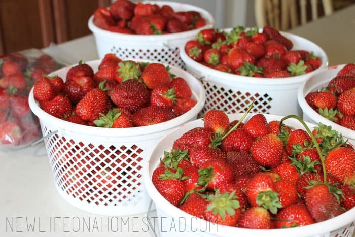 how to freeze strawberries (2)