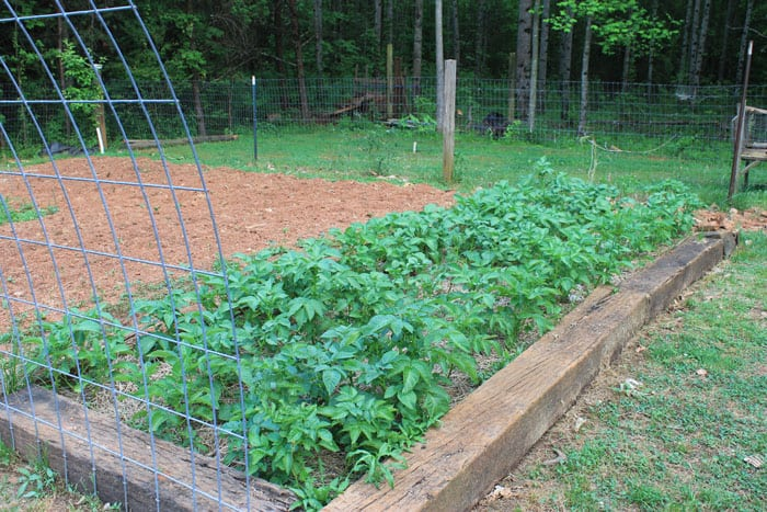 How To Plant Potatoes In A Raised Bed | http://newlifeonahomestead.com