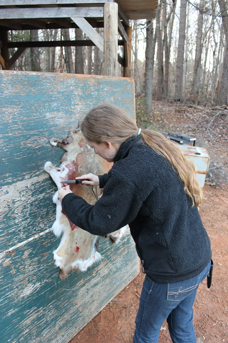 Homesteading: Deer Harvest and Hide Tanning Attempt