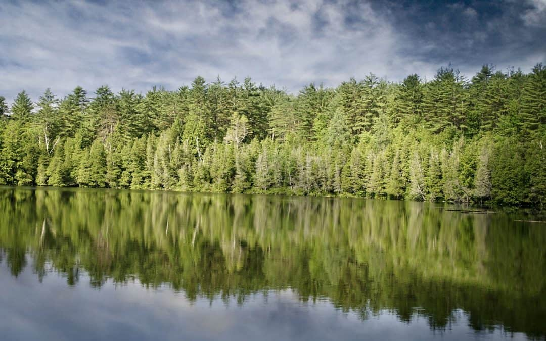 A Lesson About Contentment From The Fir Tree