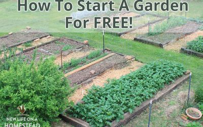 How To Start A Garden For FREE! Plants, Pots, Soil, and More.