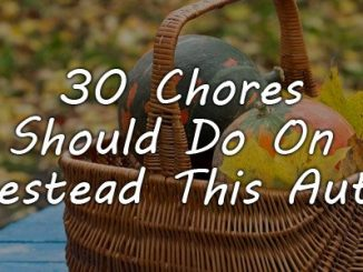 autumn homesteading chores featured
