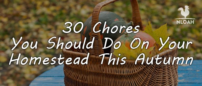 autumn homesteading chores featured