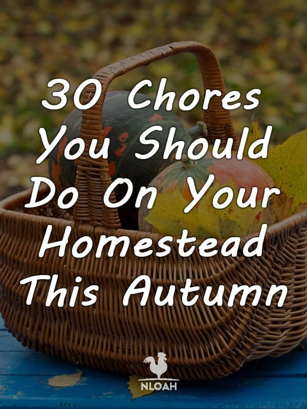 autumn homesteading chores pinterest