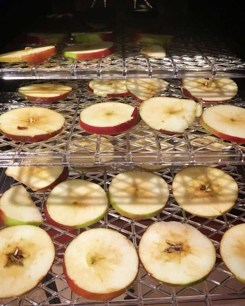 Apple Slices, loaded in the dehydrator