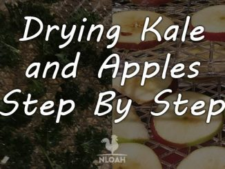 drying kale and apples featured