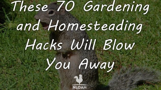 gardening hacks featured