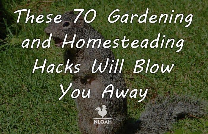 gardening hacks featured
