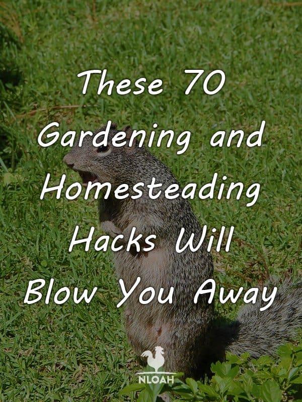 gardening hacks pinterest