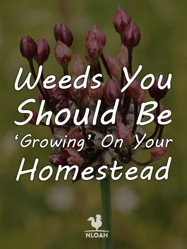 good weeds pinterest