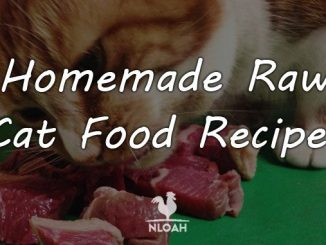 homemade cat food recipes featured