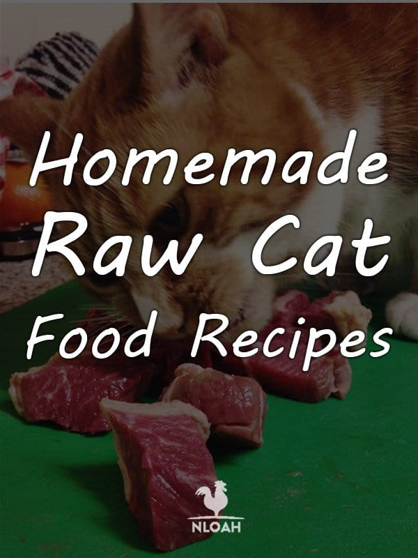 homemade cat food recipes pinterest