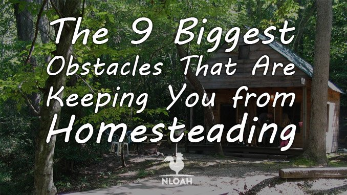 homesteading obstacles featured