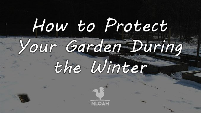 protect garden winter featured