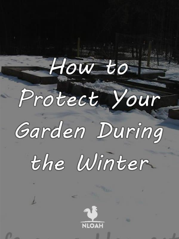protect garden winter pinterest