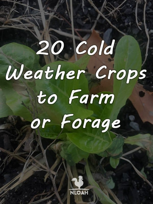 cold weather crops pinterest