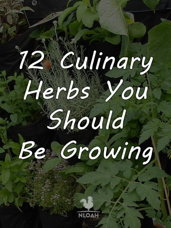 culinary herbs pinterest