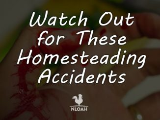homesteading accidents featured