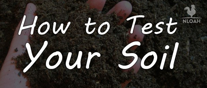 how to test soil featured