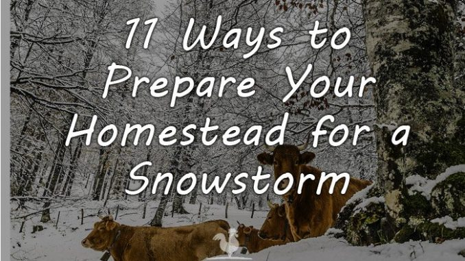 prepare homestead snowstorm featured