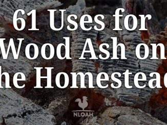 wood ash uses featured