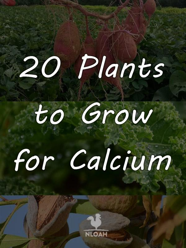 calcium plants pinterest