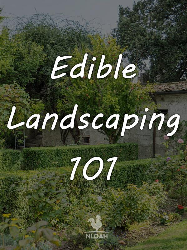 edible landscaping pinterest