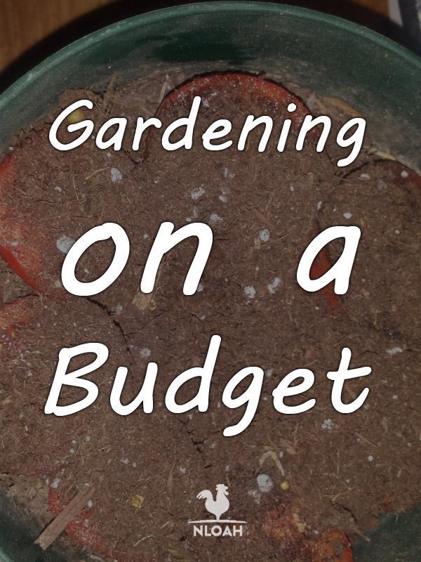 gardening budget pinterest