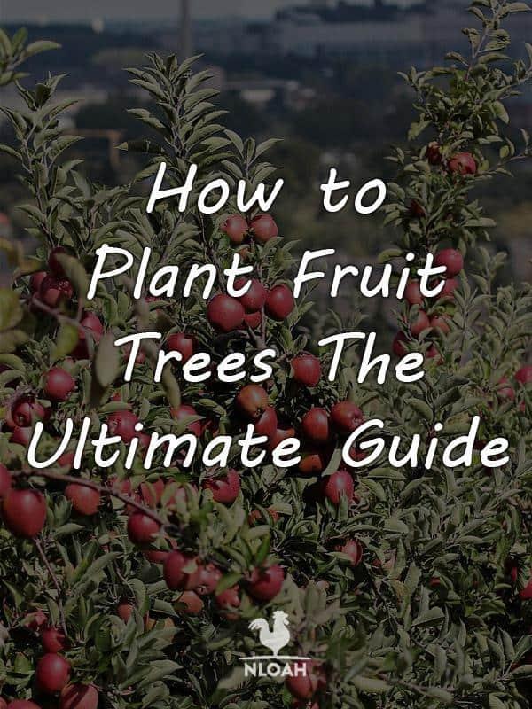 planting fruit trees pinterest