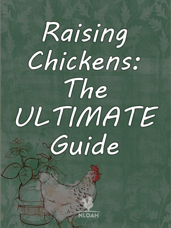 raising chickens pinterest