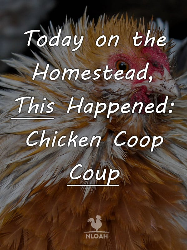 today on the homestead 3 pinterest