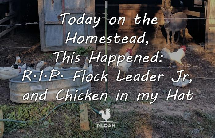today on the homestead 4 featured