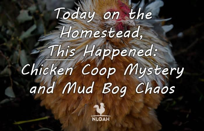 today on the_homestead chicken coop pt 2 featured